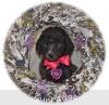 A picture of Sunridge Untouchable Twilight Dream, a silver standard poodle