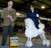 A picture of Mount Bethel's Polar Bear Midnight, CH, a white