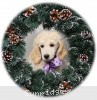 A picture of Sunridge Unforgettable Crystal Dreamz, a cream standard poodle