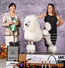 Brienwoods Leap To High Standard, AM CH, UKC GCH, IT CH, a white male Standard Poodle