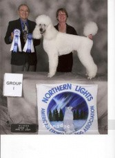 Janill Moonstone Lite My Fire, UKC CH, a white male Standard Poodle
