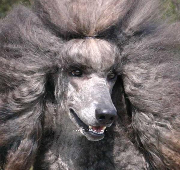Sid's lion impression